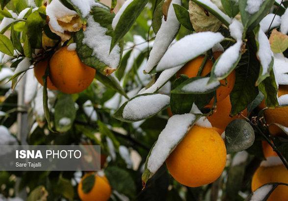 ساخت دستگاهی که با پرتاب هوای سرد مانع از یخ زدگی محصولات کشاورزی می گردد
