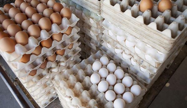 کاهش قیمت تخم مرغ در عمده فروشی