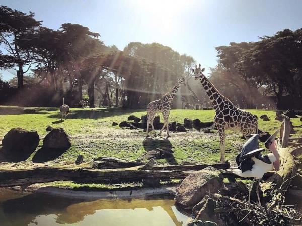 مقاله: باغ وحش و باغ سانفرانسیسکو آمریکا
