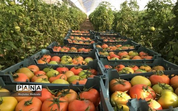 رشد 82 درصدی اعتبار طرح حمایت از محصولات کشاورزی در بودجه 1400